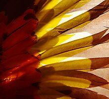 Sun Wing by kurrawinya