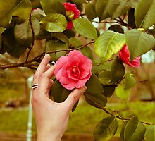 Hand and Camellia by drmador