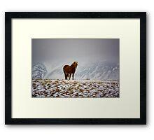 Icelandic Horse Framed Print