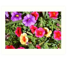 Lovely Colorful Flowers Art Print
