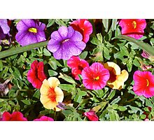 Lovely Colorful Flowers Photographic Print