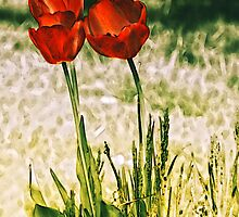 Tulip Trio by Sharon Woerner