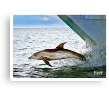 Dolphin On the Bow Canvas Print