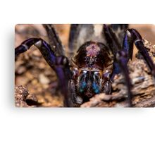 Wandering Spider Canvas Print