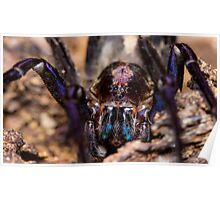 Wandering Spider Poster