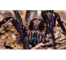 Wandering Spider Photographic Print