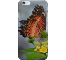 Orange Banded Butterfly iPhone Case/Skin