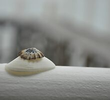 Stacked Shells by Thomas Tatchell