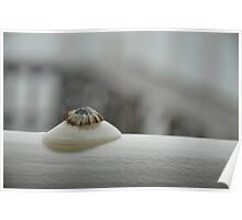 Stacked Shells Poster