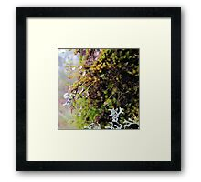 Rainforest No.4 Framed Print