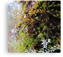 Rainforest No.4 Canvas Print