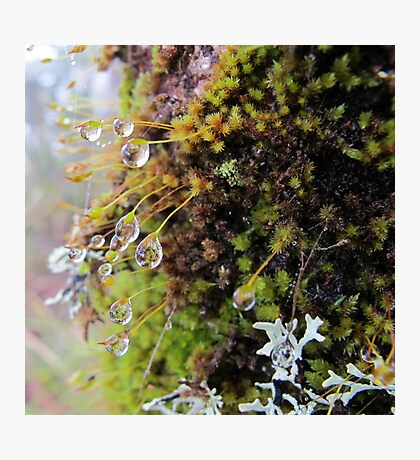 Rainforest No.4 Photographic Print