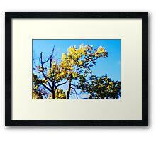 Sparse Green Yellow Framed Print