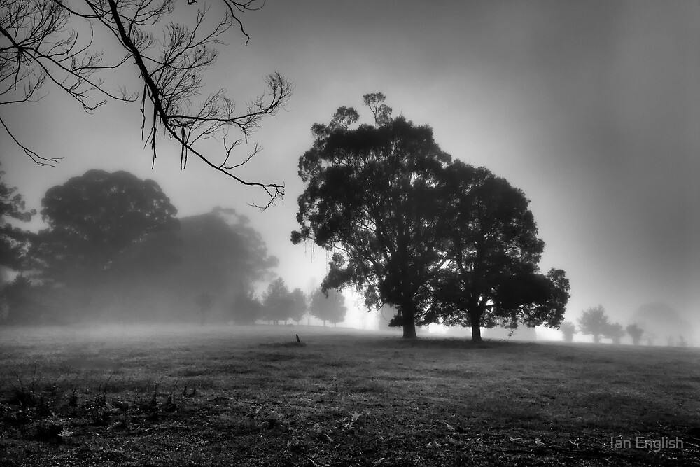 Trees in the Fog by Ian English