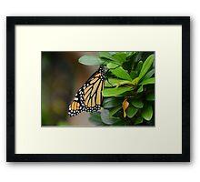 Folded Butterfly Framed Print