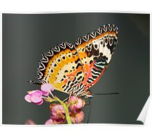 The Malay Lacewing Poster