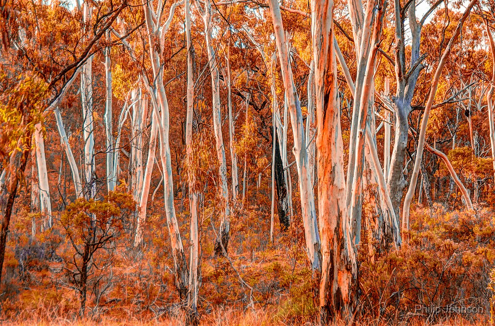 Bush Melody - Tumbarumba NSW - The HDR EXperience by Philip Johnson
