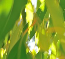 Blur of Gum Leaves by metriognome