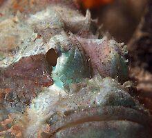 Bearded Scorpion Fish by James Deverich