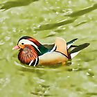 Mandarin Duck by shalisa