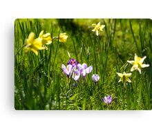 Happy spring flowers Canvas Print