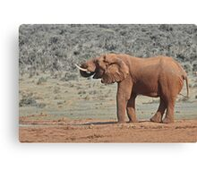 Loxodonta africana  Elephant Canvas Print