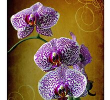 flowers by laikaincosmos