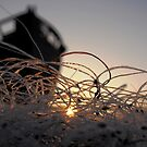Fish nets at dawn... by wigs