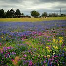 Blue Bonnets and Wildflowers on a Texas Ranch near Austin 2014.04 by Jack McCabe