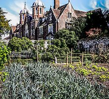 Stately Home Onions by Chris L Smith