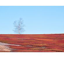 Spring Crimson Photographic Print