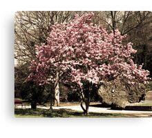 Blooming Tree in Hot Springs Arkansas Canvas Print