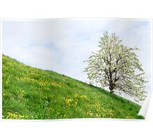 Sea dike in Zeeland with fruit tree and buttercups Poster