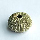 Sea Urchin Shell by Sue Robinson