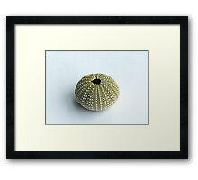Sea Urchin Shell Framed Print