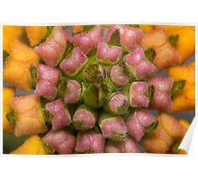 Lantana Flower (Immature Blooms) Poster