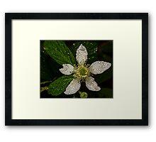 BlackBerry Bloom Framed Print
