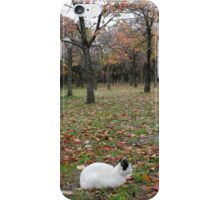 Cat in the leaves in Japan iPhone Case/Skin