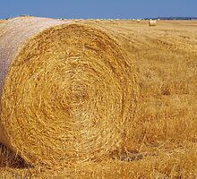 Hay on The Darling Downs by CarolHancock