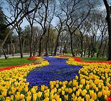 tulip flowers park by laikaincosmos