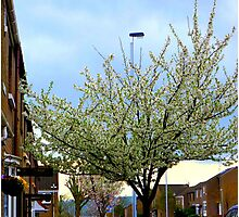 Enhancing The City With Blossom Photographic Print