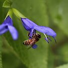 Pollination. by Jeanette Varcoe.