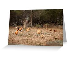 The chicken yard Greeting Card