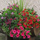 Petunias Galore by BlueMoonRose