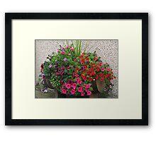 Petunias Galore Framed Print