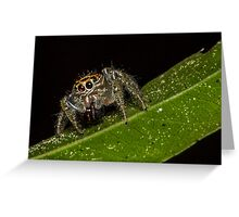 Jumping Spider 1 Greeting Card