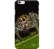 Jumping Spider 1 iPhone Case/Skin