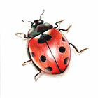 Lady Bug by Danielle Y. Bernard