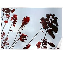 Red leaves in sky Poster