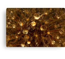 Dandelion Water Orbs Canvas Print